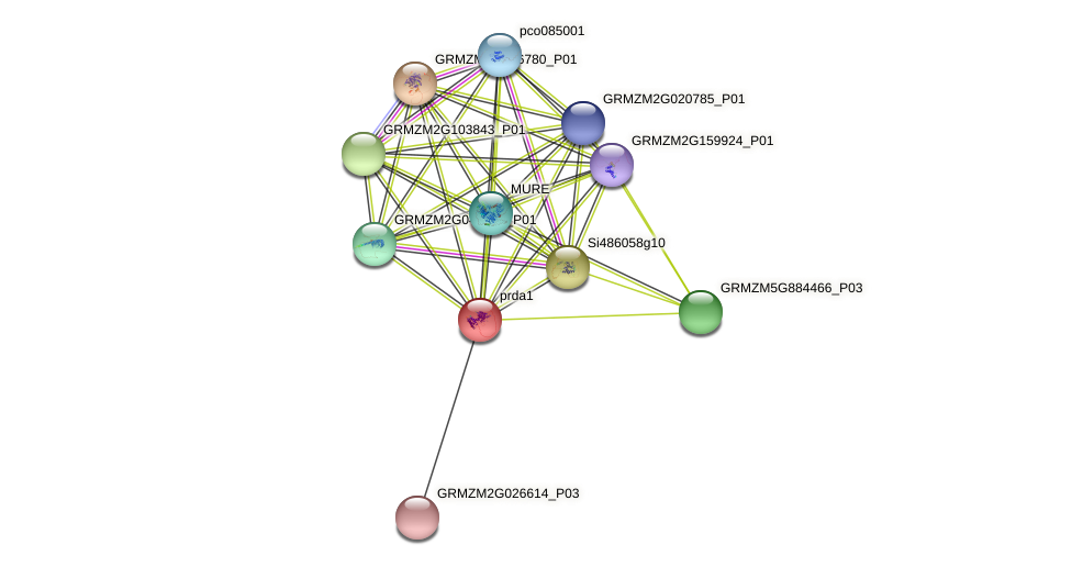 GRMZM2G079452_P01 protein (Zea mays) - STRING interaction network