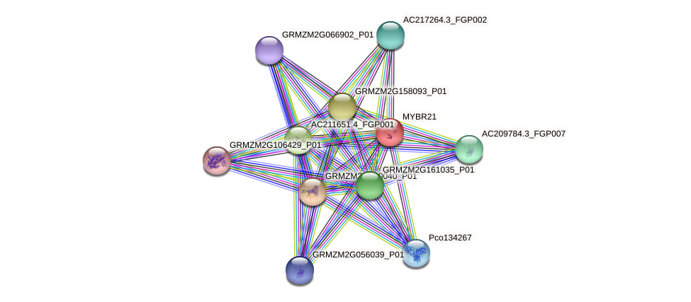 MYBR21 protein (Zea mays) - STRING interaction network