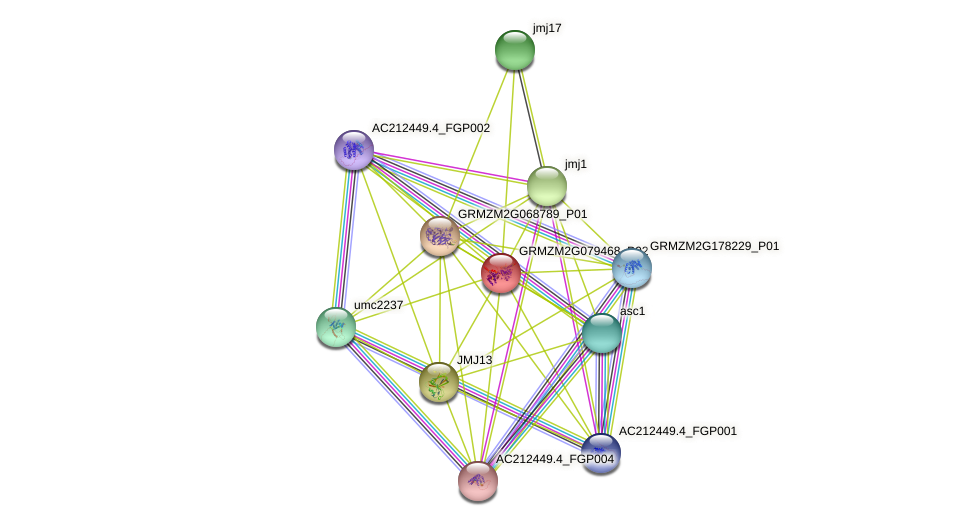 GRMZM2G079468_P02 protein (Zea mays) - STRING interaction network