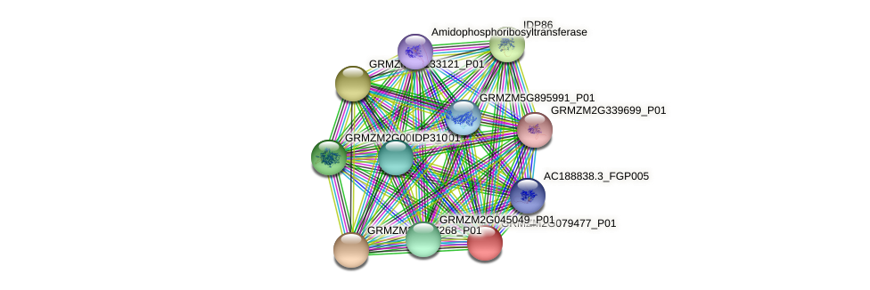 GRMZM2G079477_P01 protein (Zea mays) - STRING interaction network