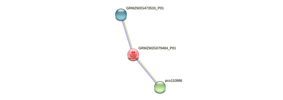 GRMZM2G079484_P01 protein (Zea mays) - STRING interaction network