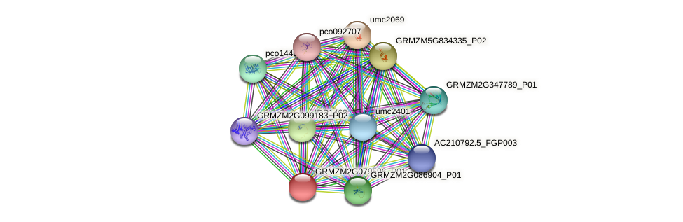 GRMZM2G079596_P01 protein (Zea mays) - STRING interaction network
