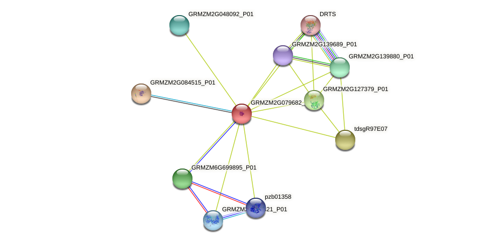 GRMZM2G079682_P02 protein (Zea mays) - STRING interaction network