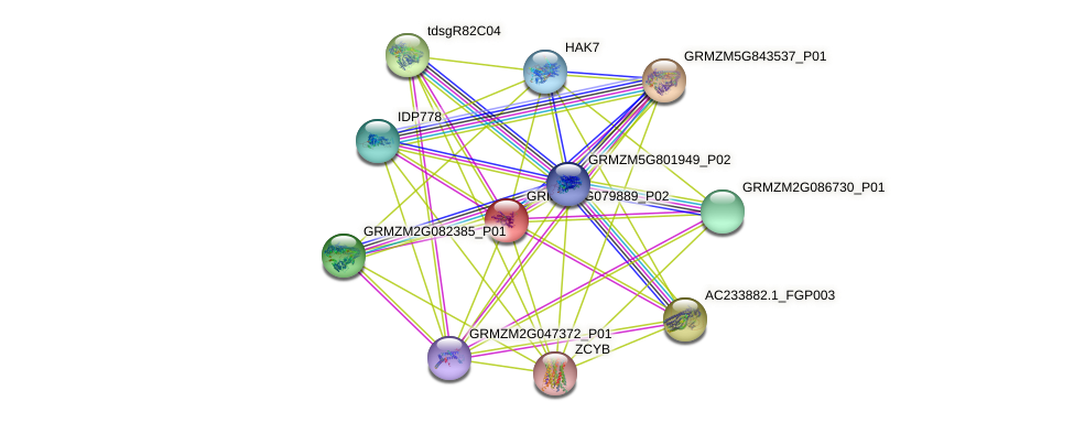 GRMZM2G079889_P02 protein (Zea mays) - STRING interaction network