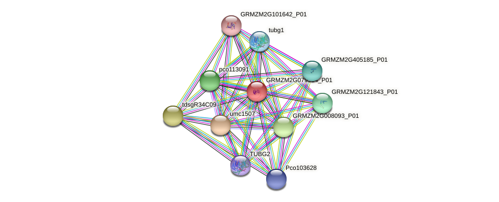 GRMZM2G079954_P01 protein (Zea mays) - STRING interaction network