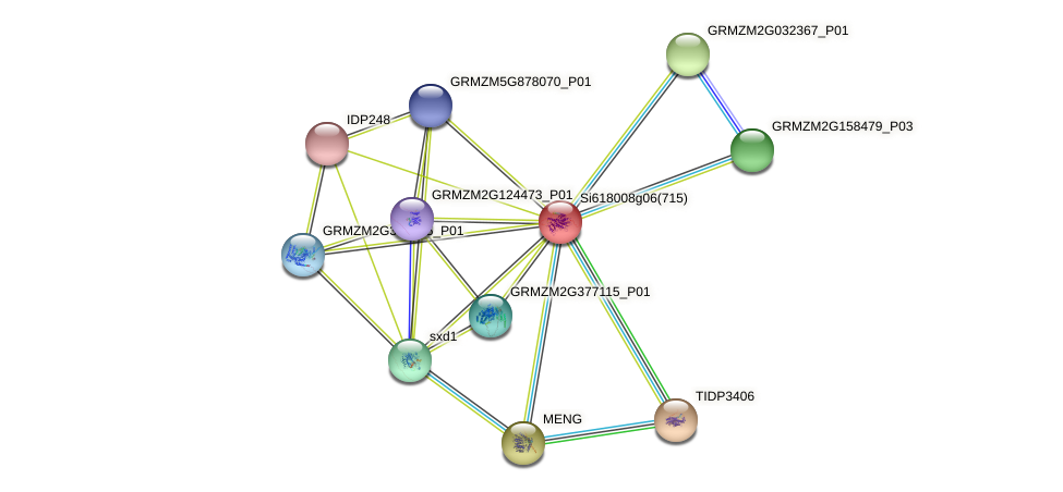GRMZM2G080044_P01 protein (Zea mays) - STRING interaction network