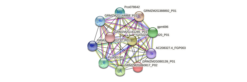 GRMZM2G080139_P01 protein (Zea mays) - STRING interaction network