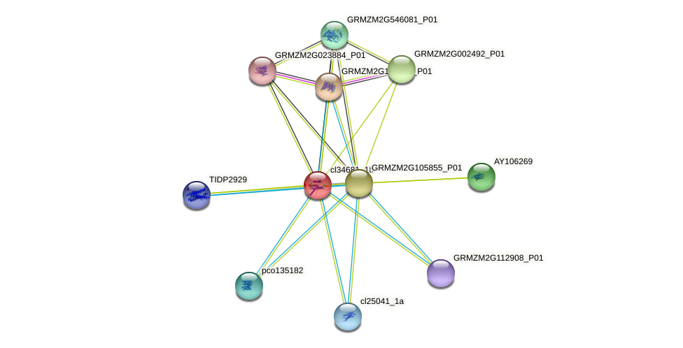 cl34681_1b protein (Zea mays) - STRING interaction network