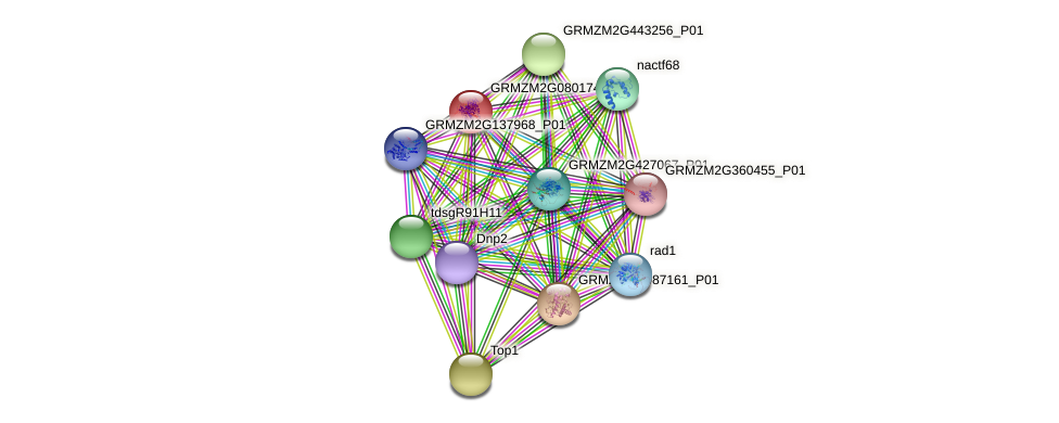 GRMZM2G080174_P02 protein (Zea mays) - STRING interaction network