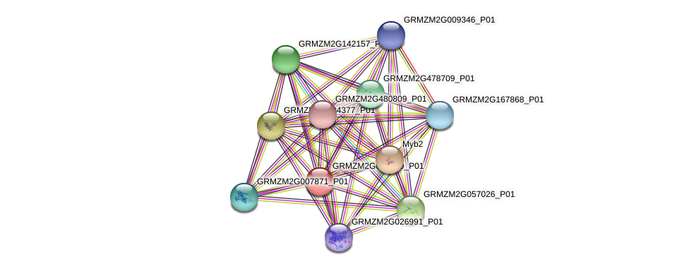 GRMZM2G080199_P01 protein (Zea mays) - STRING interaction network