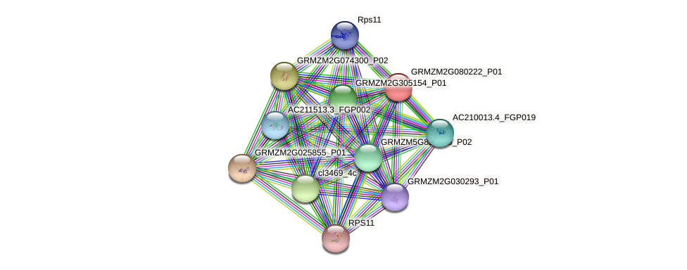GRMZM2G080222_P01 protein (Zea mays) - STRING interaction network