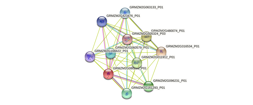 tds931.23 protein (Zea mays) - STRING interaction network