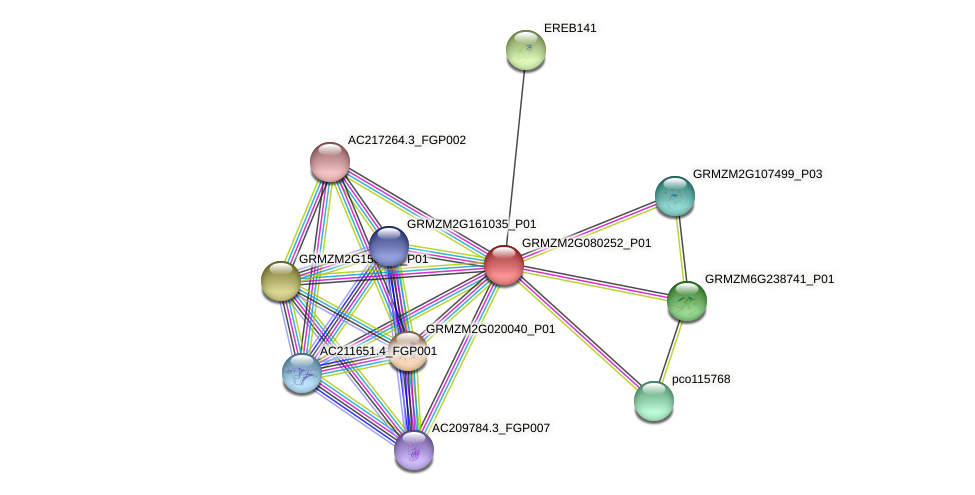 GRMZM2G080252_P01 protein (Zea mays) - STRING interaction network