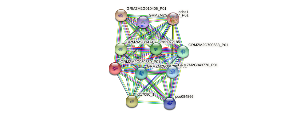 GRMZM2G080380_P01 protein (Zea mays) - STRING interaction network