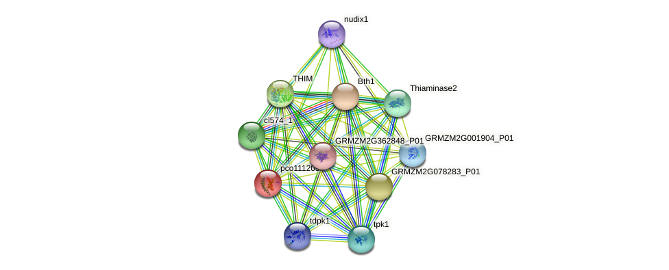 pco111209 protein (Zea mays) - STRING interaction network