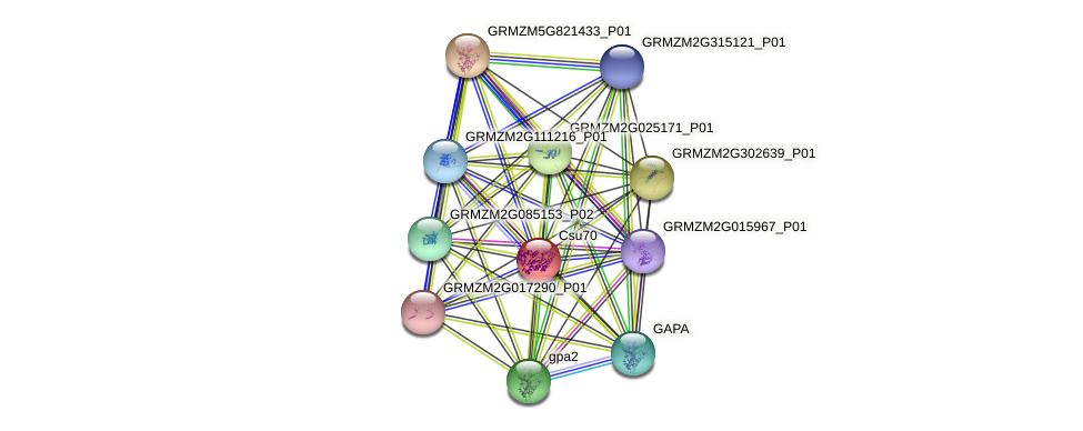 GRMZM2G080546_P01 protein (Zea mays) - STRING interaction network