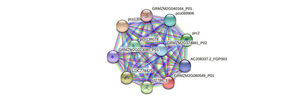 GRMZM2G080549_P01 protein (Zea mays) - STRING interaction network