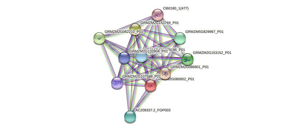GRMZM2G080652_P01 protein (Zea mays) - STRING interaction network