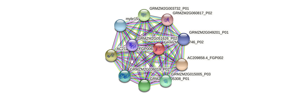 GRMZM2G080746_P02 protein (Zea mays) - STRING interaction network