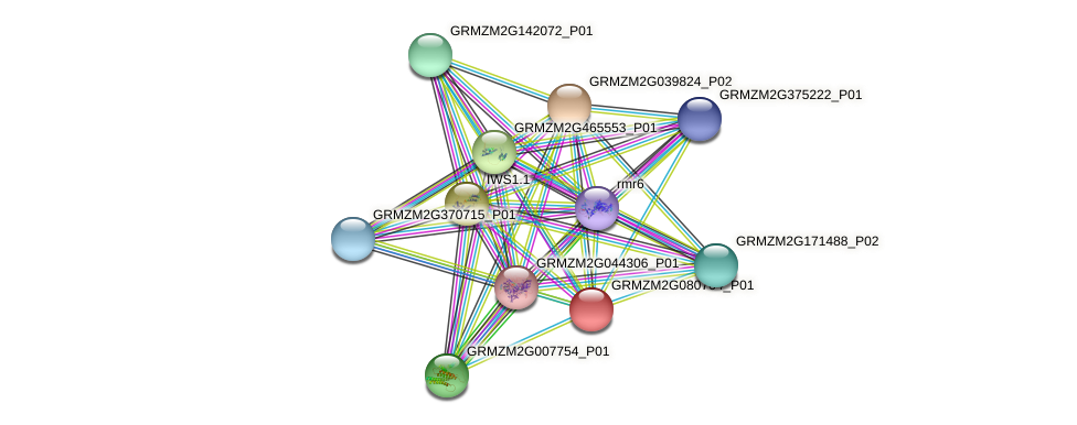 GRMZM2G080764_P01 protein (Zea mays) - STRING interaction network