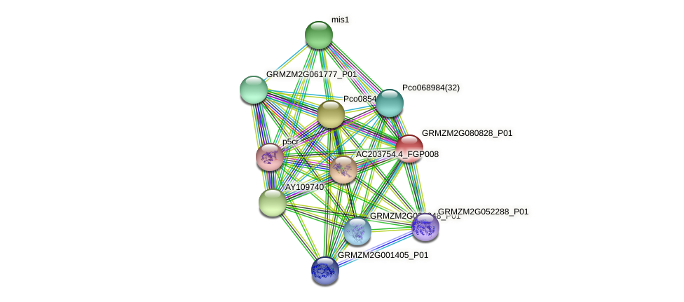 GRMZM2G080828_P01 protein (Zea mays) - STRING interaction network