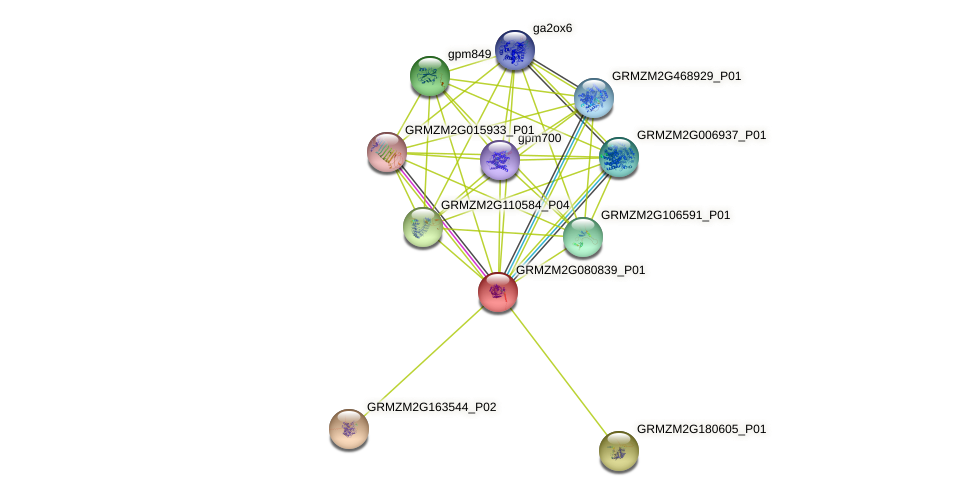 Zm.11838 protein (Zea mays) - STRING interaction network