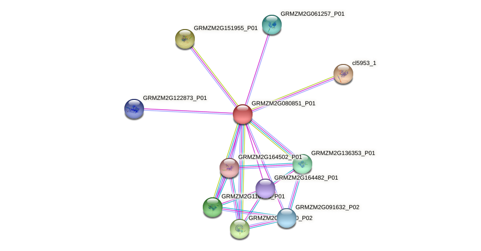 GRMZM2G080851_P01 protein (Zea mays) - STRING interaction network