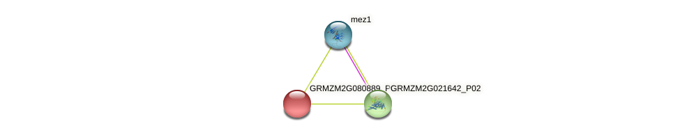GRMZM2G080889_P02 protein (Zea mays) - STRING interaction network