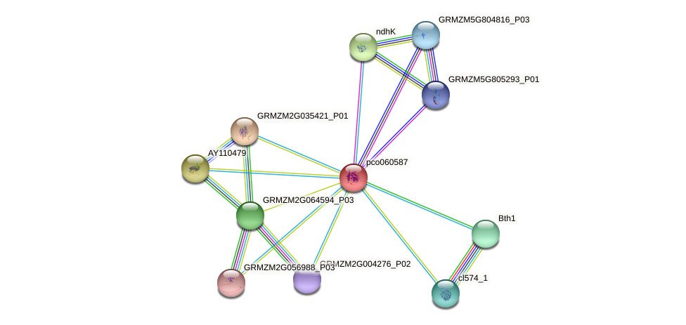 pco060587 protein (Zea mays) - STRING interaction network