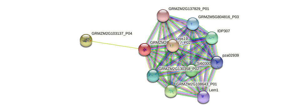 Zm.20490 protein (Zea mays) - STRING interaction network