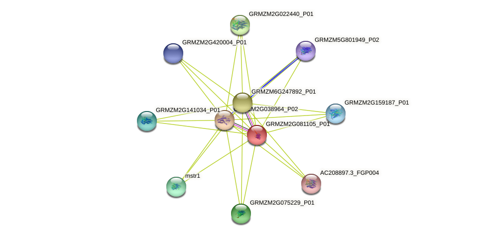 GRMZM2G081105_P01 protein (Zea mays) - STRING interaction network