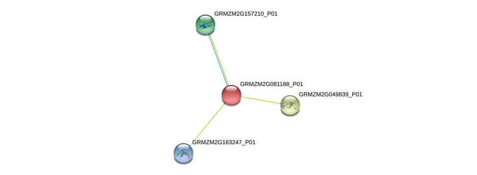 cl12175_1 protein (Zea mays) - STRING interaction network