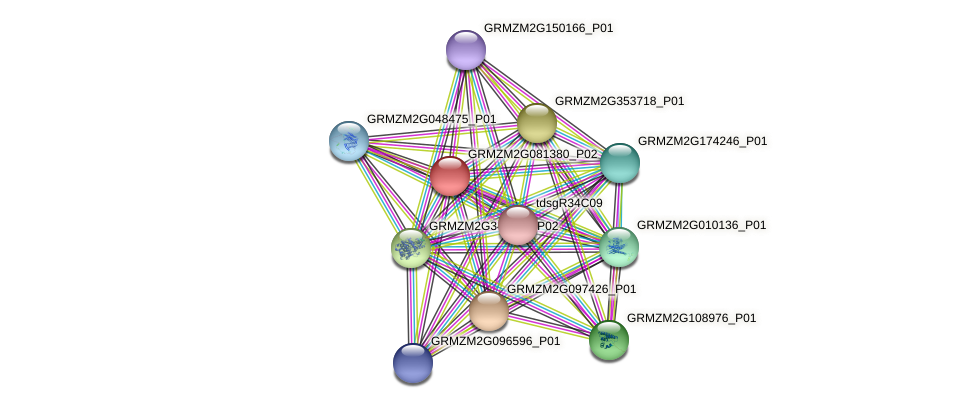 GRMZM2G081380_P02 protein (Zea mays) - STRING interaction network