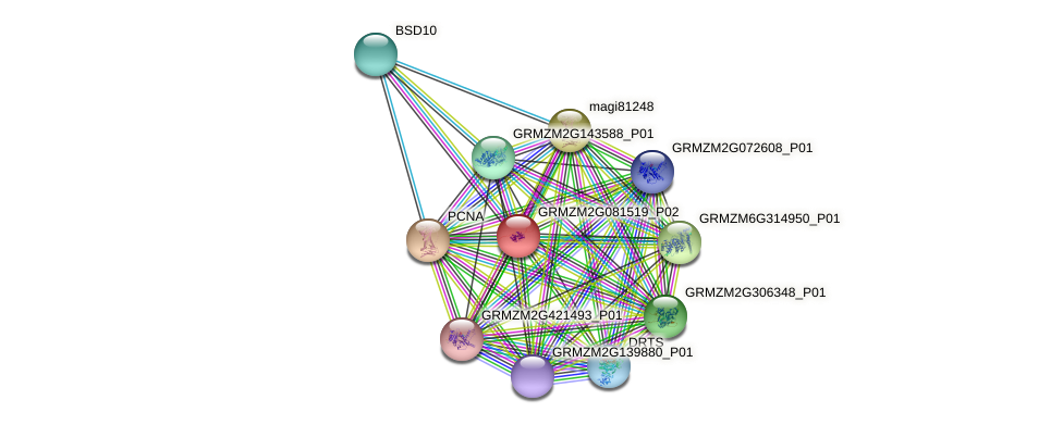 GRMZM2G081519_P02 protein (Zea mays) - STRING interaction network