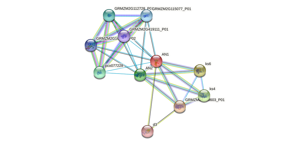 Zm.228 protein (Zea mays) - STRING interaction network