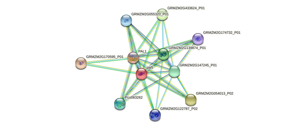 GRMZM2G081582_P01 protein (Zea mays) - STRING interaction network
