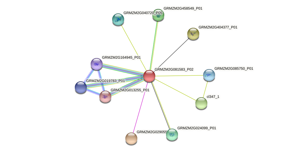 GRMZM2G081583_P02 protein (Zea mays) - STRING interaction network