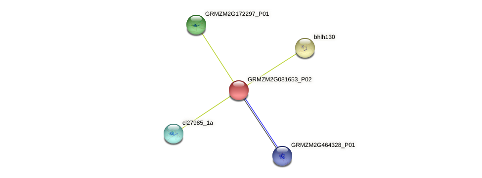 GRMZM2G081653_P02 protein (Zea mays) - STRING interaction network