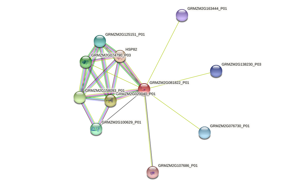 GRMZM2G081822_P01 protein (Zea mays) - STRING interaction network