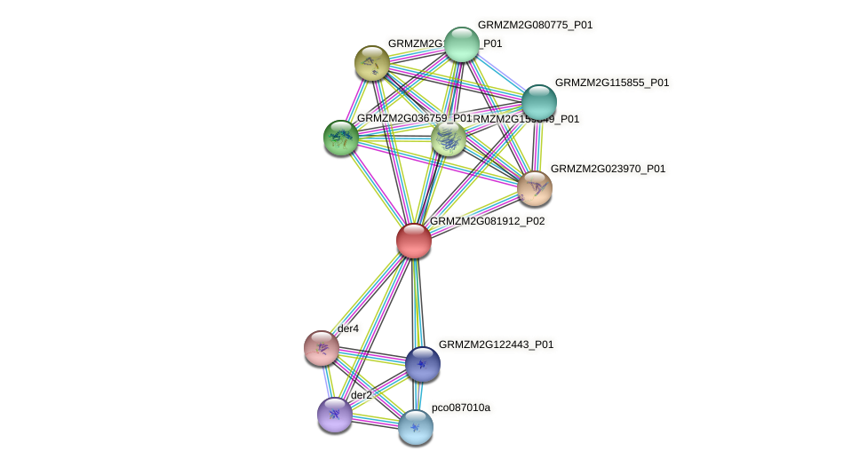 GRMZM2G081912_P01 protein (Zea mays) - STRING interaction network