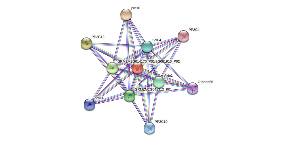 GRMZM2G081915_P02 protein (Zea mays) - STRING interaction network