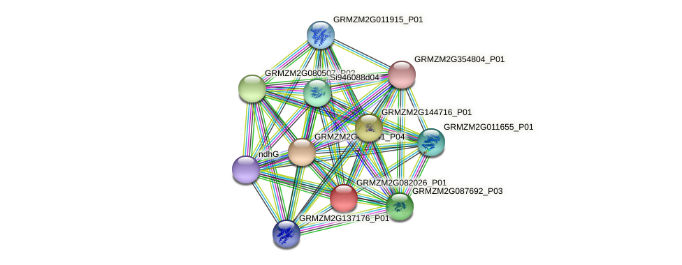 GRMZM2G082026_P01 protein (Zea mays) - STRING interaction network