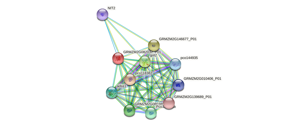 GRMZM2G082032_P01 protein (Zea mays) - STRING interaction network