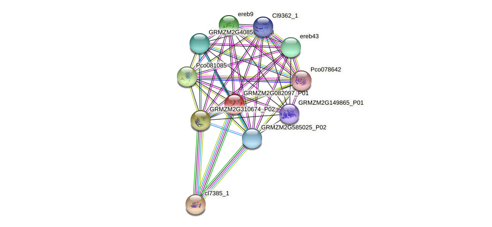 GRMZM2G082097_P01 protein (Zea mays) - STRING interaction network