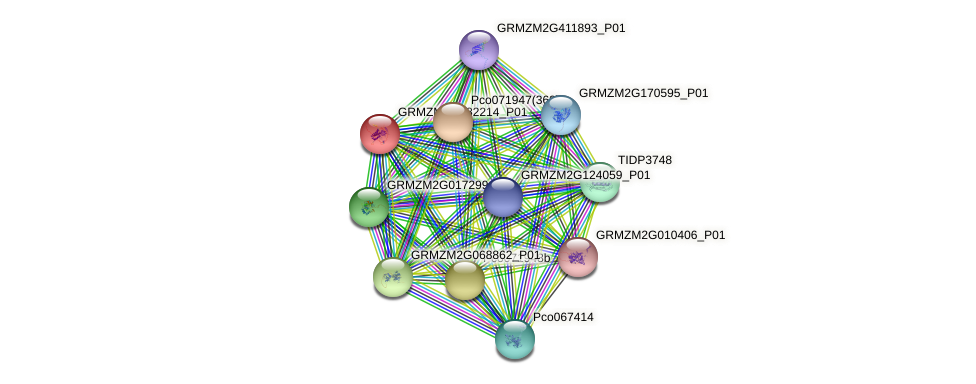 GRMZM2G082214_P01 protein (Zea mays) - STRING interaction network