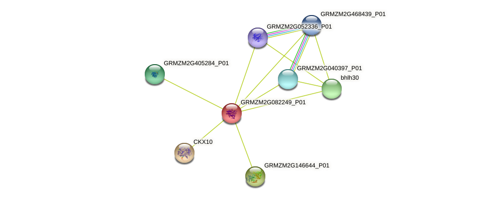 GRMZM2G082249_P01 protein (Zea mays) - STRING interaction network