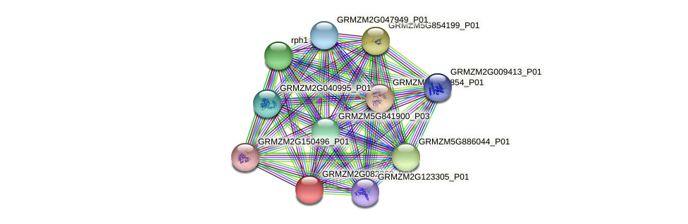 Zm.24451 protein (Zea mays) - STRING interaction network