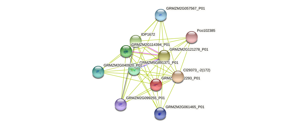 GRMZM2G082293_P01 protein (Zea mays) - STRING interaction network