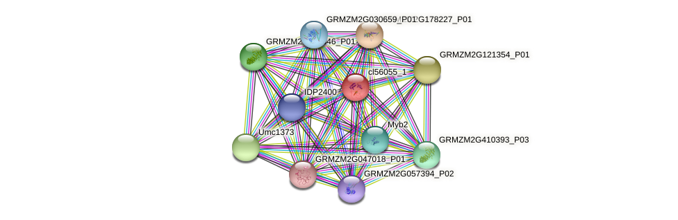 cl56055_1 protein (Zea mays) - STRING interaction network
