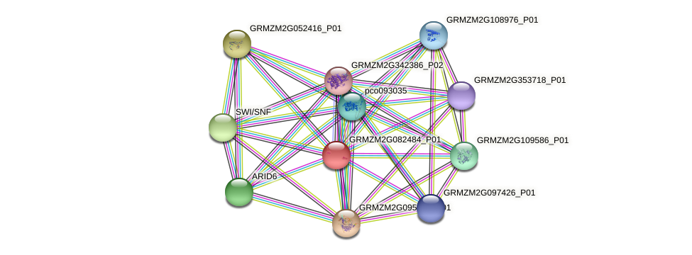 GRMZM2G082484_P01 protein (Zea mays) - STRING interaction network
